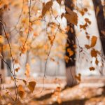 Autumn Equinox (Poem)